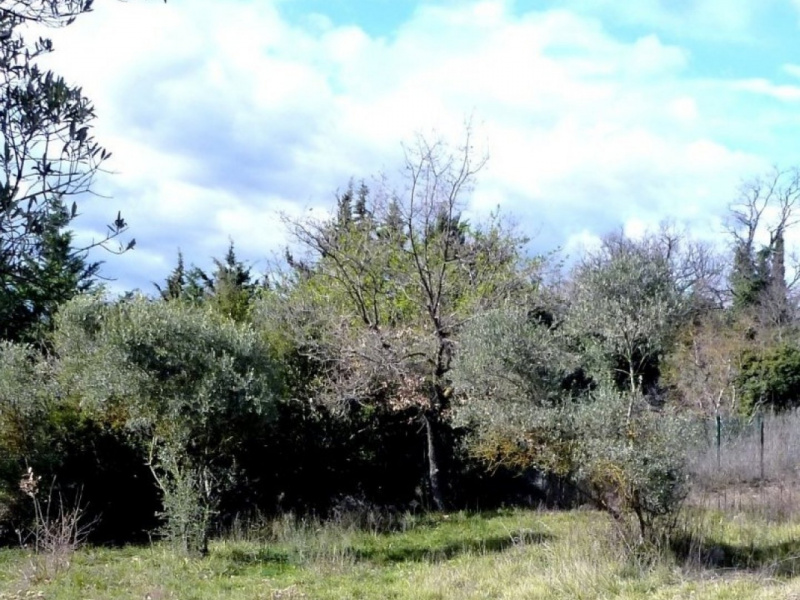 AGENCE LUBERON TRANSACTIONS, VENTE Terrains, ref. : 627 / 706645